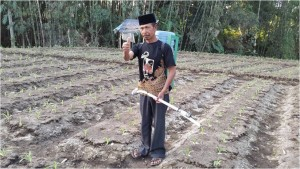 aplikasi pupuk cair pada jagung